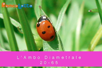 L'Ambo-Diametrale-20-65